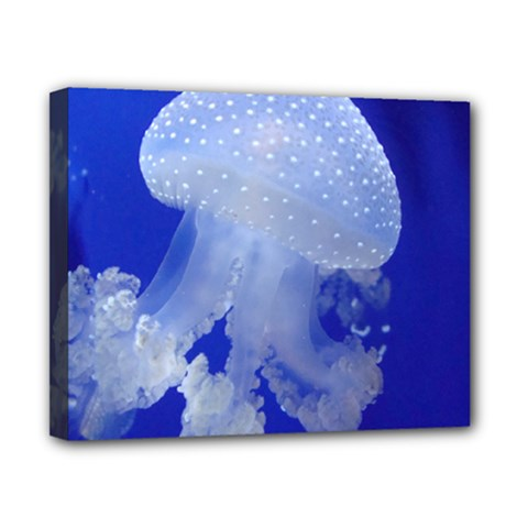 Spotted Jellyfish Canvas 10  X 8  by trendistuff