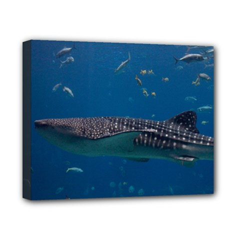 Whale Shark 1 Canvas 10  X 8  by trendistuff