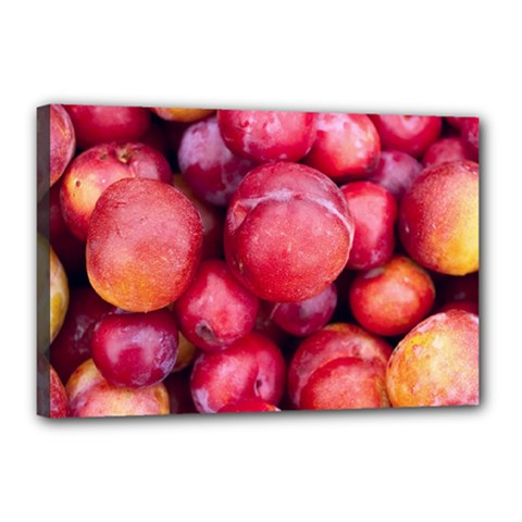 Plums 1 Canvas 18  X 12