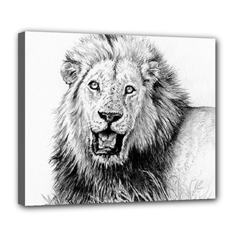 Lion Wildlife Art And Illustration Pencil Deluxe Canvas 24  X 20