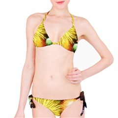Celebration Colorful Fireworks Beautiful Bikini Set by Sapixe