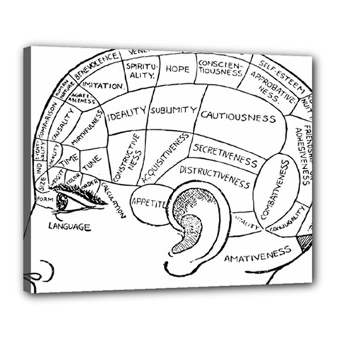 Brain Chart Diagram Face Fringe Canvas 20  X 16