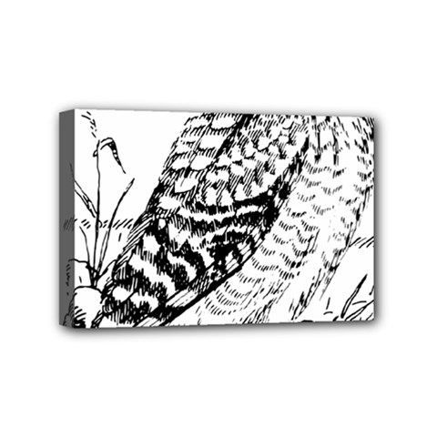 Animal Bird Forest Nature Owl Mini Canvas 6  X 4