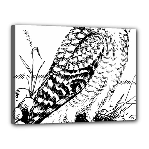 Animal Bird Forest Nature Owl Canvas 16  X 12