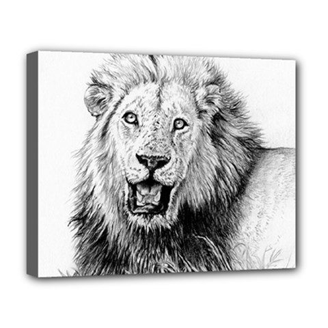Lion Wildlife Art And Illustration Pencil Deluxe Canvas 20  X 16
