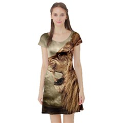 Roaring Lion Short Sleeve Skater Dress