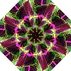 Plant Purple Green Leaves Garden Folding Umbrellas by Nexatart