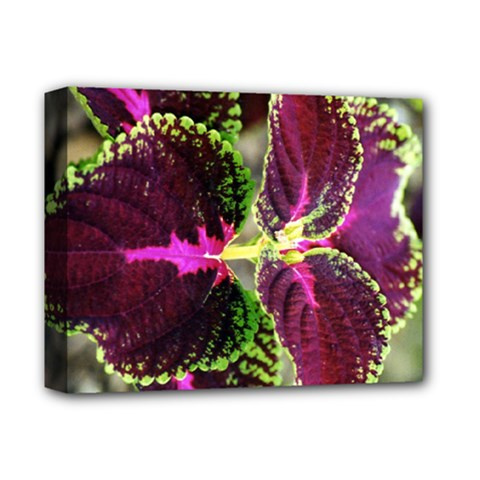 Plant Purple Green Leaves Garden Deluxe Canvas 14  X 11