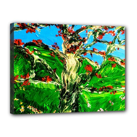 Coral Tree 2 Canvas 16  X 12
