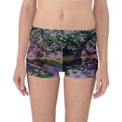 Old Tree 6 Boyleg Bikini Bottoms