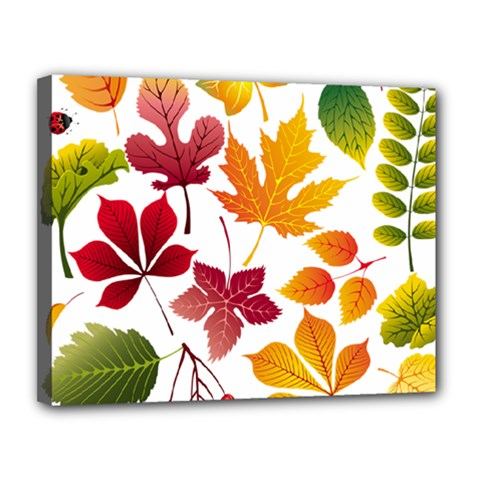 Beautiful Autumn Leaves Vector Canvas 14  X 11
