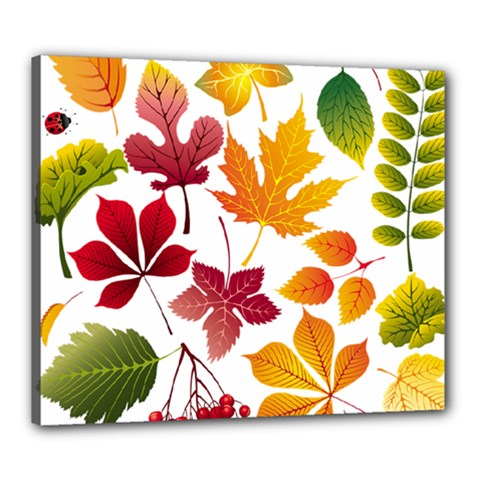 Beautiful Autumn Leaves Vector Canvas 24  X 20