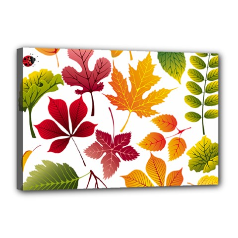 Beautiful Autumn Leaves Vector Canvas 18  X 12