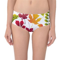 Beautiful Autumn Leaves Vector Mid Waist Bikini Bottoms