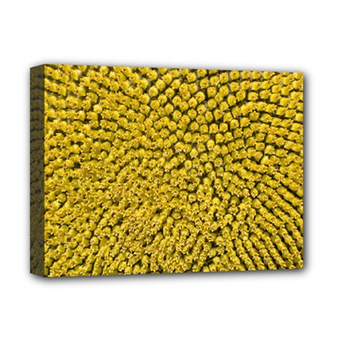 Sunflower Head (helianthus Annuus) Hungary Felsotold Deluxe Canvas 16  X 12