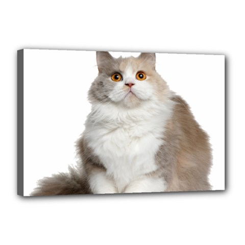 Cutefat Cat  Canvas 18  X 12