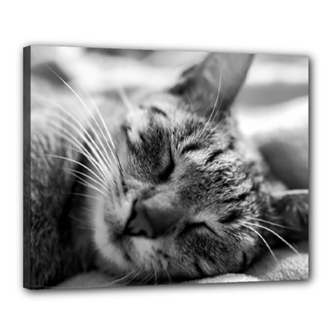 Adorable Animal Baby Cat Canvas 20  X 16