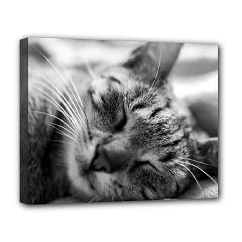 Adorable Animal Baby Cat Deluxe Canvas 20  X 16