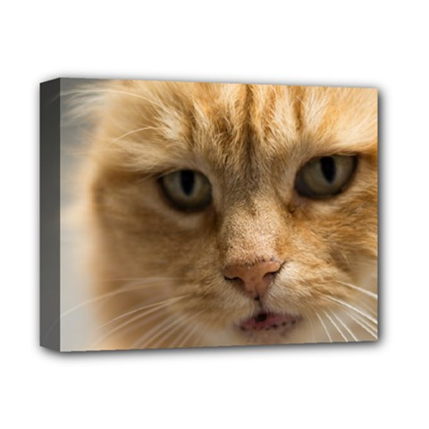 Animal Pet Cute Close Up View Deluxe Canvas 14  X 11