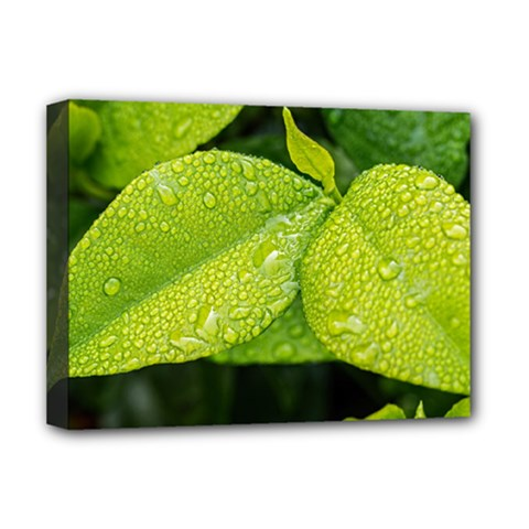 Leaf Green Foliage Green Leaves Deluxe Canvas 16  X 12