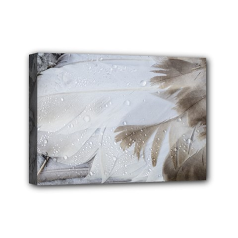 Feather Brown Gray White Natural Photography Elegant Mini Canvas 7  X 5