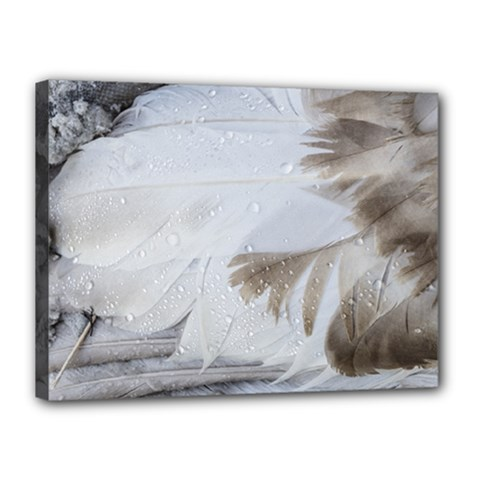 Feather Brown Gray White Natural Photography Elegant Canvas 16  X 12  by yoursparklingshop