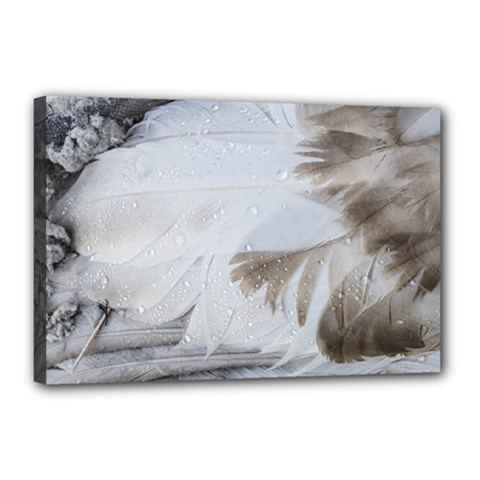 Feather Brown Gray White Natural Photography Elegant Canvas 18  X 12  by yoursparklingshop