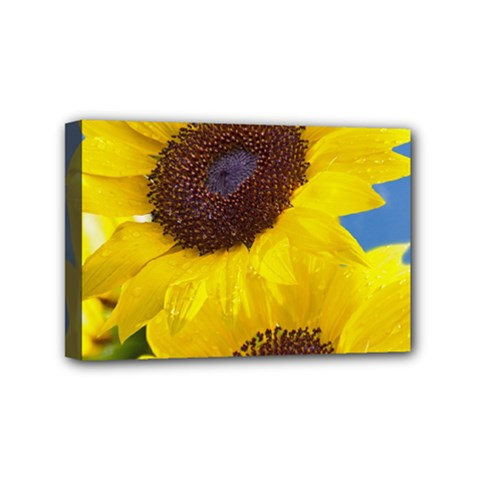 Sunflower Floral Yellow Blue Sky Flowers Photography Mini Canvas 6  X 4