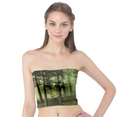 Forest Tree Landscape Tube Top