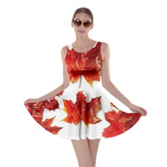 Innovative Skater Dress
