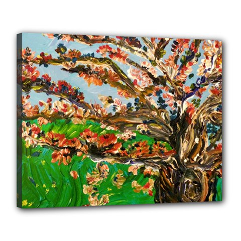 Coral Tree Canvas 20  X 16