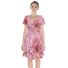 Background Texture Flower Petals Short Sleeve Bardot Dress