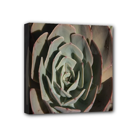 Succulent Green Pink Rosettes Mini Canvas 4  X 4  by Sapixe