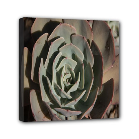 Succulent Green Pink Rosettes Mini Canvas 6  X 6  by Sapixe