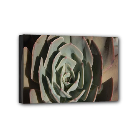 Succulent Green Pink Rosettes Mini Canvas 6  X 4  by Sapixe