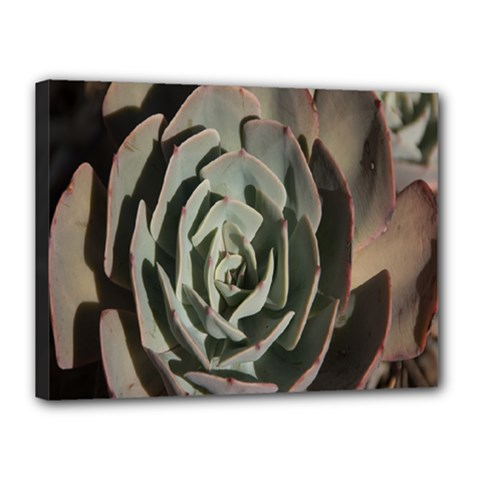 Succulent Green Pink Rosettes Canvas 16  X 12  by Sapixe