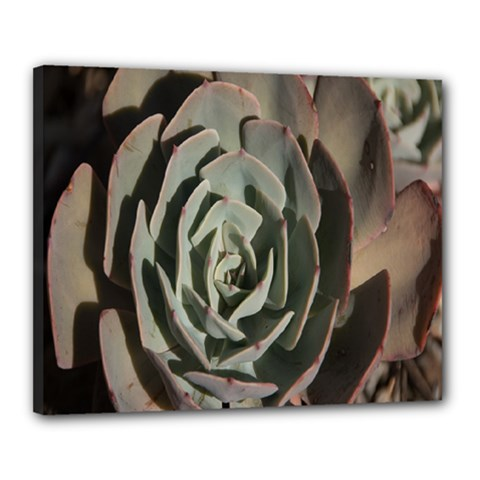 Succulent Green Pink Rosettes Canvas 20  X 16  by Sapixe