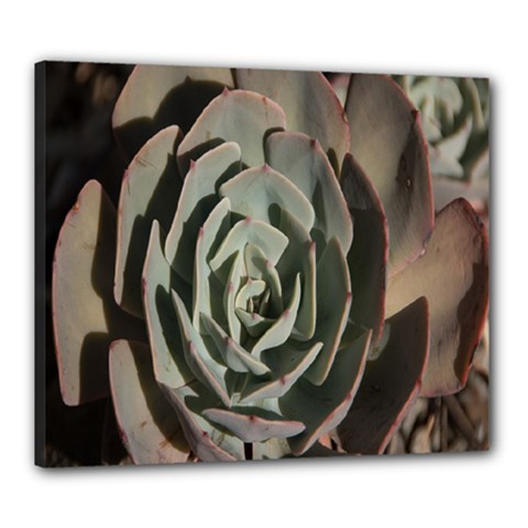 Succulent Green Pink Rosettes Canvas 24  X 20  by Sapixe