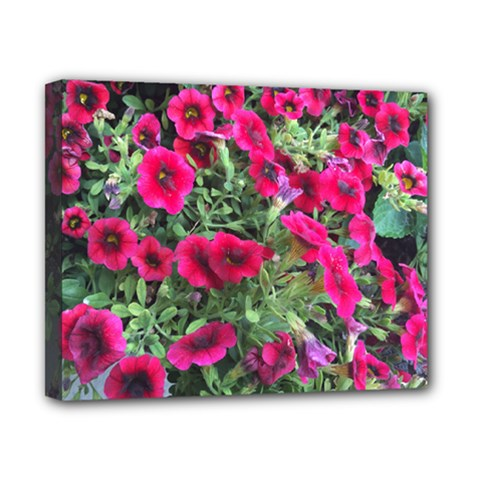 Pink Petunias Canvas 10  X 8  by bloomingvinedesign