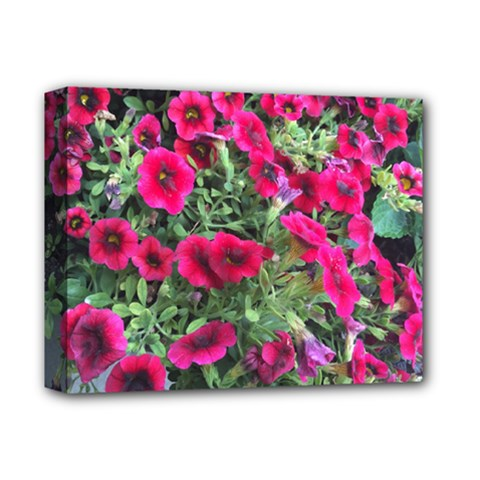 Pink Petunias Deluxe Canvas 14  X 11  by bloomingvinedesign