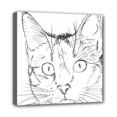 Cat Feline Animal Pet Mini Canvas 8  X 8  by Sapixe