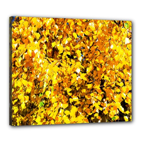 Birch Tree Yellow Leaves Canvas 24  X 20  by FunnyCow