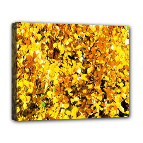 Birch Tree Yellow Leaves Deluxe Canvas 20  X 16