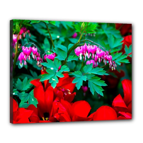 Bleeding Heart Flowers Canvas 20  X 16