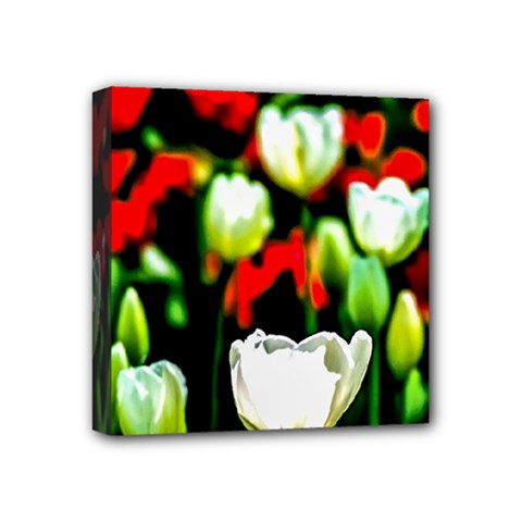 White And Red Sunlit Tulips Mini Canvas 4  X 4