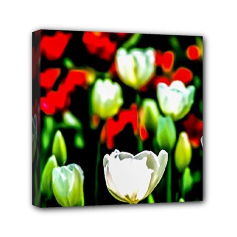 White And Red Sunlit Tulips Mini Canvas 6  X 6