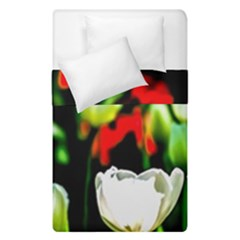 White And Red Sunlit Tulips Duvet Cover Double Side (single Size) by FunnyCow