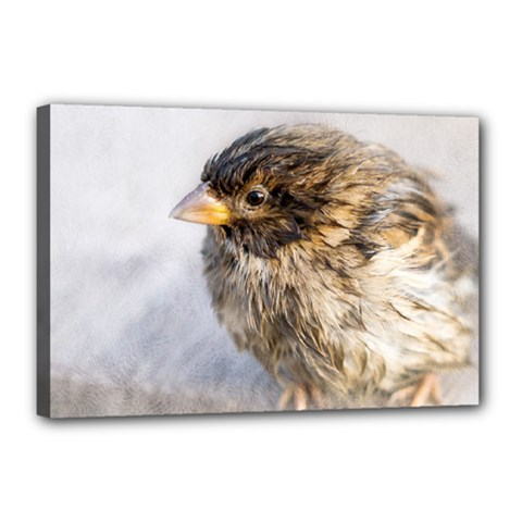 Funny Wet Sparrow Bird Canvas 18  X 12