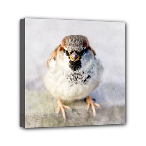 Do Not Mess With Sparrows Mini Canvas 6  X 6