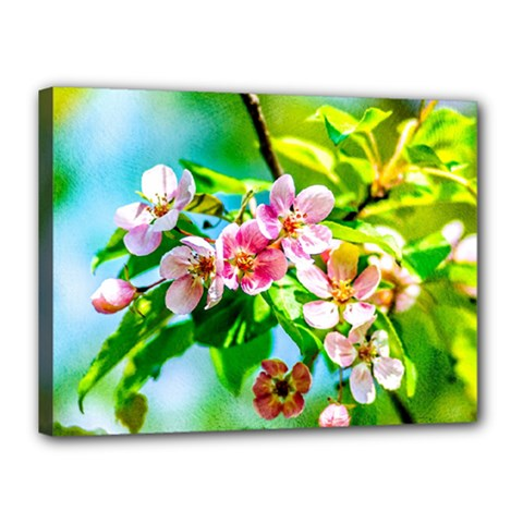 Crab Apple Flowers Canvas 16  X 12